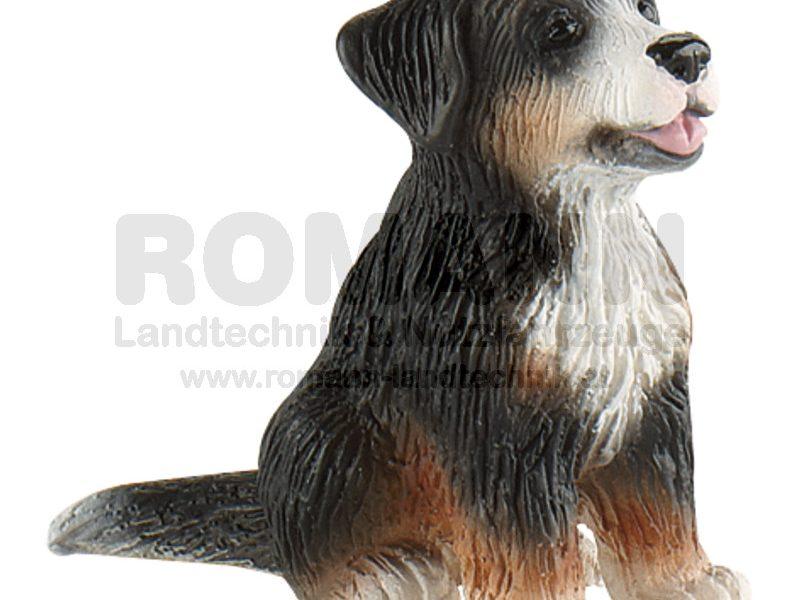 Berner Sennenhund Welpe Joy