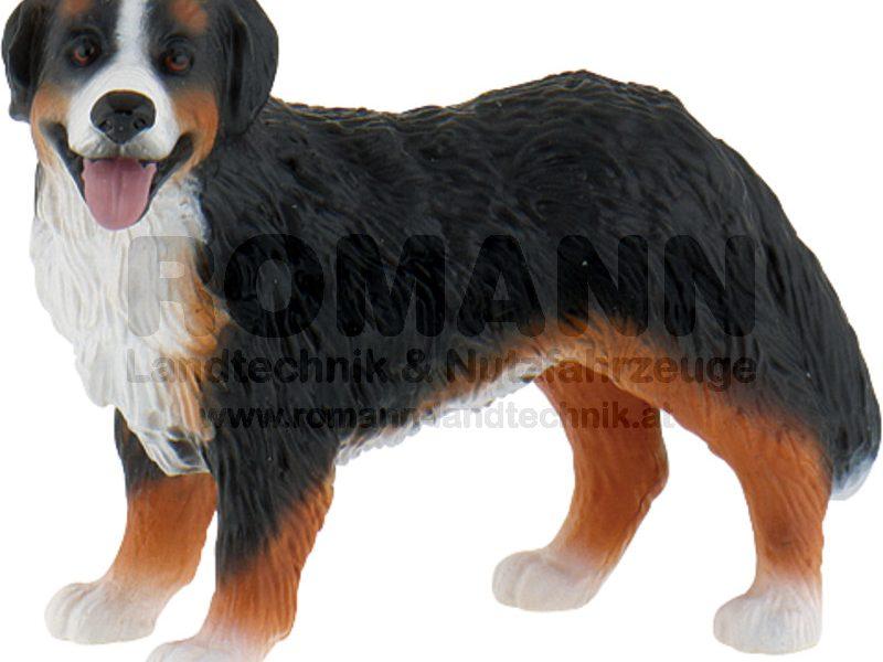 Berner Sennenhund Bianca